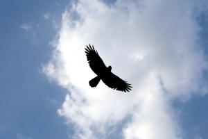 bird_free